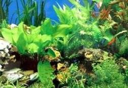 Thực vật có thể giúp lọc nước